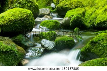 Peaceful Nature Stream, New Zealand. - stock photo