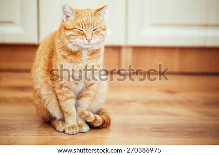 Peaceful Orange Red Tabby Cat Male Kitten Curled Up Sleeping In His Bed On Laminate Floor. - stock photo