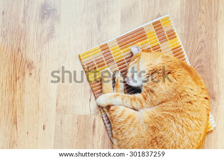 Peaceful Orange Red Tabby Cat Male Kitten Curled Up Sleeping In His Bed On Laminate Floor. Top View - stock photo