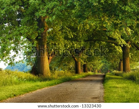 Peaceful tree lined country road with a warm sunset glow. - stock photo