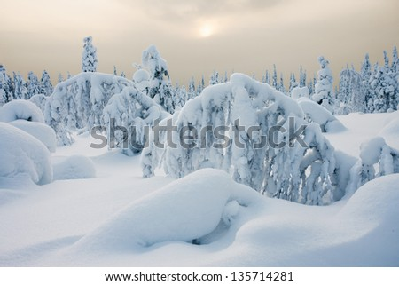 Peaceful winter landscape in Lapland - stock photo