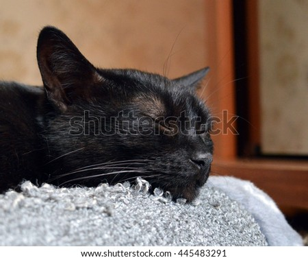 Peacefull sleep of young black domestic cat with a happy expression on its face with head lying on grey scratching post: close up photo - stock photo