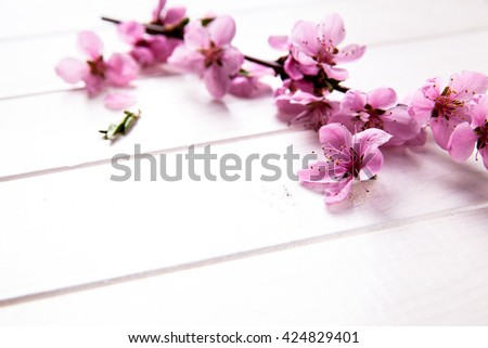 Peach blossom on white wooden background. Fruit flowers. - stock photo