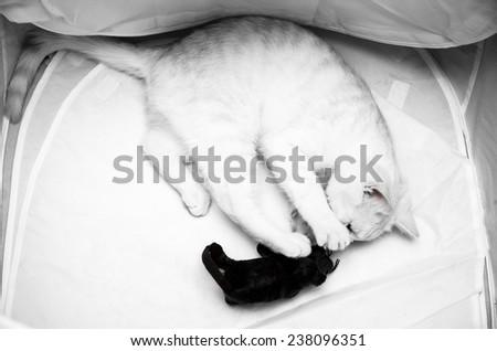 Peach cat - stock photo