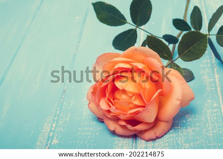 Peach colored rose on the blue wooden background, filtered photo - stock photo