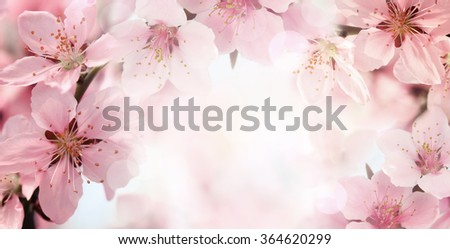 Peach flower blossom on pink background - stock photo