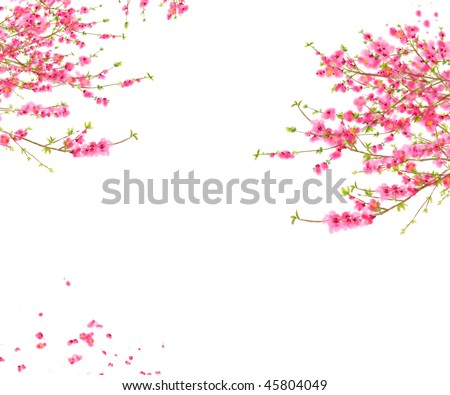 Peach or cherry blossom background in spring time stock photo