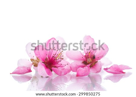 Peach pink flowers on a white background - stock photo