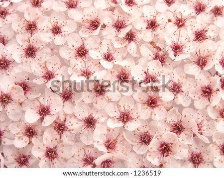 Peach Plum Flowers Pattern Abstract Background - stock photo