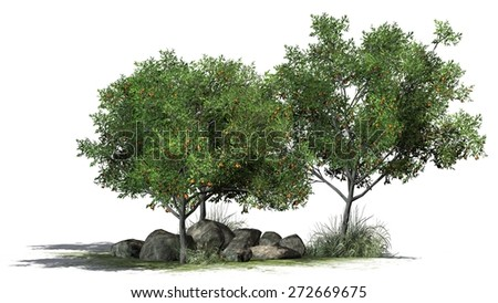 Peach Tree on grass and stones isolated on white background