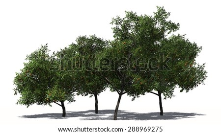 peach trees - separated on white background