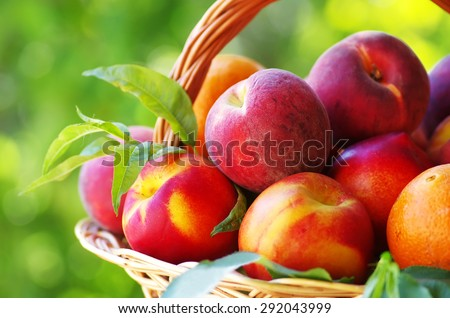 peaches and nectarines in basket  - stock photo
