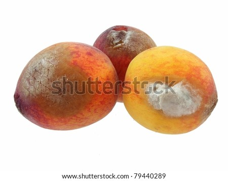Peaches Rotted - stock photo