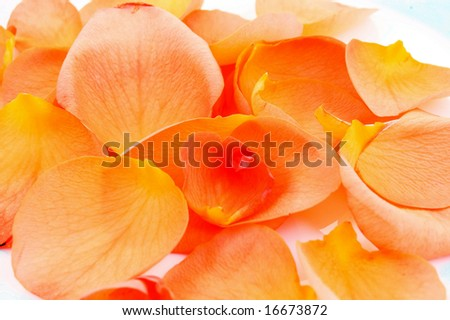 peachy petals background - stock photo