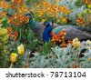 Peacock and peahen courting in the colorful flowerbed - stock photo