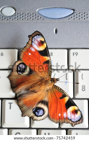 Peacock butterfly (Inachis io) on the laptop keyboard. - stock photo