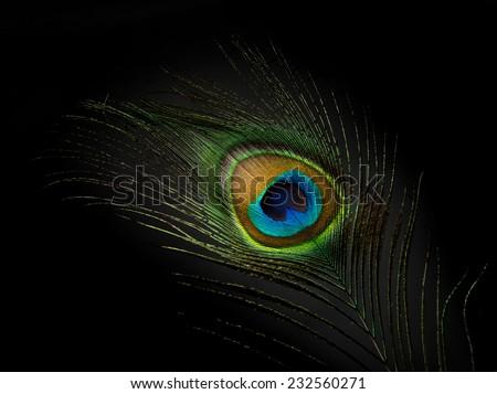 Peacock eye feather on black - stock photo