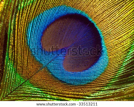 Peacock feather abstract closeup background. - stock photo