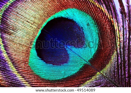 Peacock feather abstract closeup background - stock photo