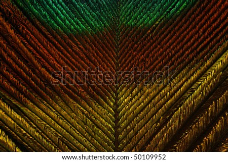 peacock feather background abstract - stock photo
