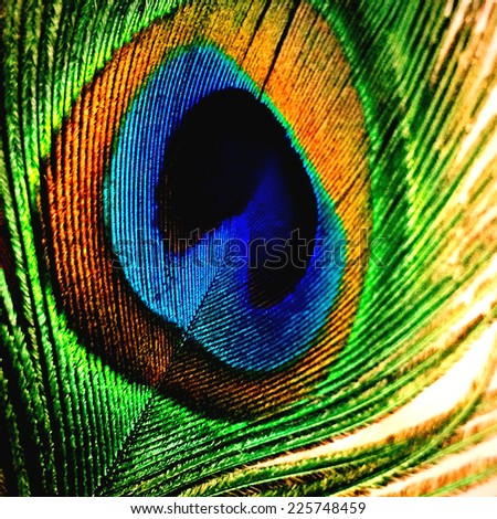 peacock feather close- up - stock photo
