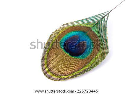 peacock feather isolated on a white background. - stock photo