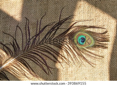 Peacock feather on canvas of jute - stock photo