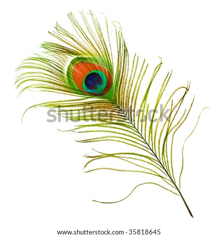 Peacock Feather over white - stock photo
