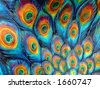 Peacock Feather Pattern - stock photo