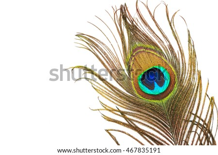 Peacock feather with copy-space, Peacock plume close-up