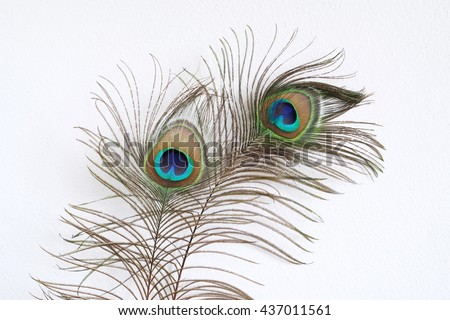 Peacock feather with white wall background