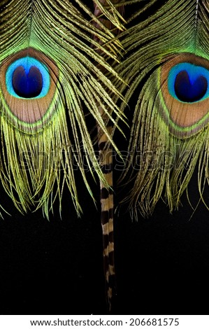 peacock feathers and bird feathers put on black look like face