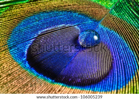 Peacock Feathers Background - stock photo