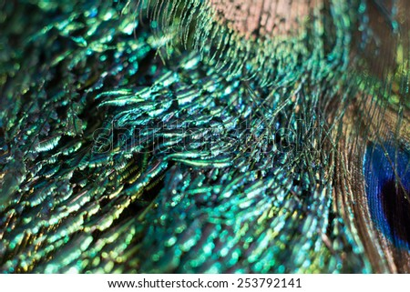 Peacock feathers, background macro. - stock photo
