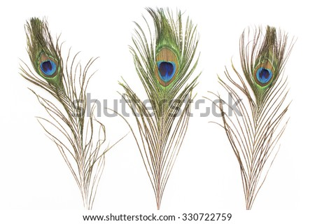 Peacock feathers isolated on white.