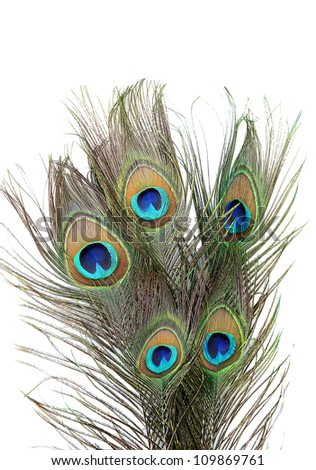 Peacock feathers on white background close-up