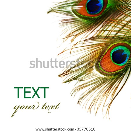 Peacock Feathers over white - stock photo