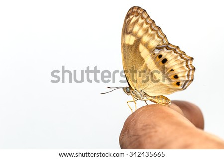 Peacock pansy butterfly on human finger with white background - stock photo