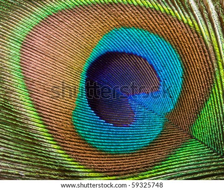 Peacock plume close up - stock photo