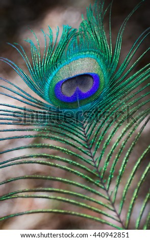 peacock's feather detail view - stock photo