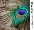 peacock´s feather on weathered wooden board - stock photo