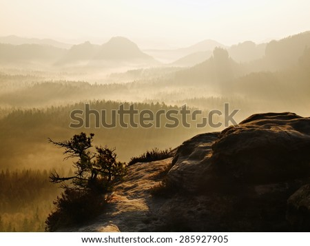Peak above landscape. Majestic mountain cut the lighting mist. Deep valley is full of colorful fog and rocky hills are sticking up to Sun. - stock photo
