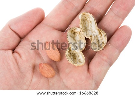 Peanuts with white background, close up