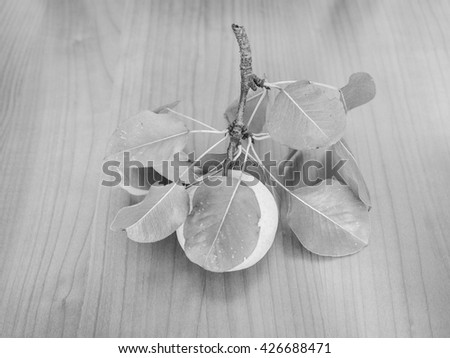 Pear (Pyrus) fruit, healthy vegetarian food on a wooden table in black and white