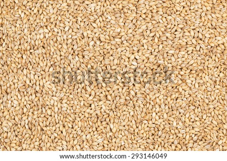 Pearl barley, as background, texture - stock photo