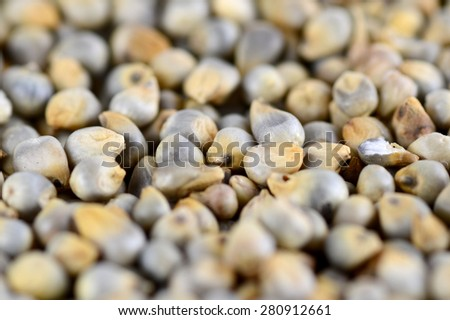 Pearl millet (Bajra) as background. Close up. - stock photo