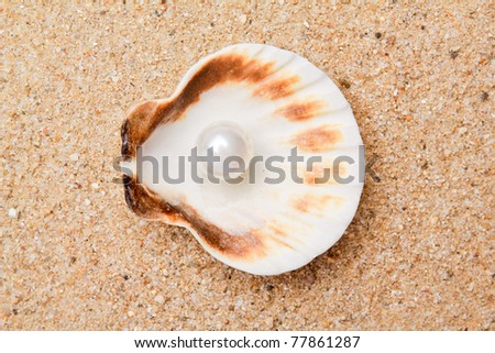 pearl on the seashell . The exotic sea shell . treasure from the sea - stock photo