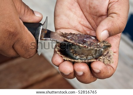 Pearl oyster from Bahrain gets opened. - stock photo