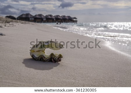 Pearl shell closeup on the sand against the backdrop of water bungalows - stock photo