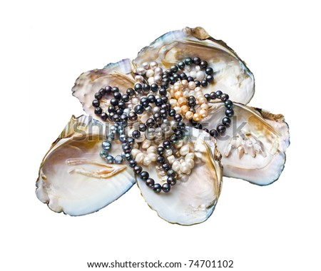 pearls in a shell on a white background - stock photo